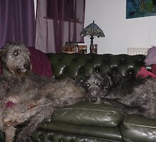 Idun and Loki the Deerhounds by Tracy Manning