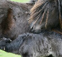 Motherly Love by Frances Taylor
