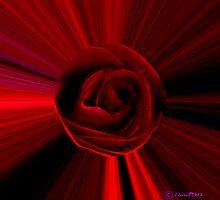 Rose Blast by Lisa Taylor
