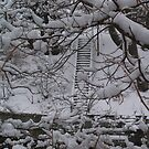 Winter Stairs by BarbL