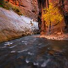 Zion Narrows Fall Color by Zane Paxton