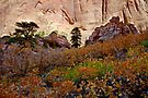 Kolob Canyon Fall Colors by Zane Paxton
