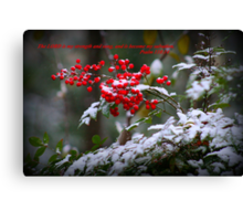Holly Berries covered in snow.  Canvas Print