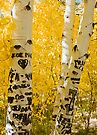 Silver Lake Aspens-2 by Zane Paxton