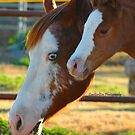 Like Mum by CowGirlZenPhoto
