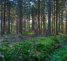 Woods by niklas94