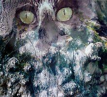 the hidden cat by wolfschwerdt
