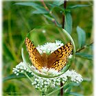 Butterfly Bubble by vigor