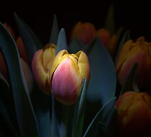 Tulips by Calelli