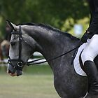 Grey warming up~ Rylestone-Kandos Show 2010 by MomentsinTime