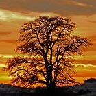 Black Locust Sunset by Rodney55