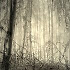 Magic forest 3 by Patricia Ausweger Matz