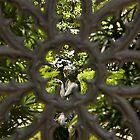 Garden Gate in Savannah, GA by KellyEverill