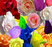 Rainbow Rosie by kimbarose