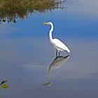 Florida Wildlife by gcampbell