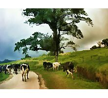 Going Home After A Days Outing  Photographic Print