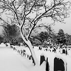 Tree in the snow by StephenRB