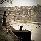 Feeding Gulls  by EligoDesign