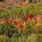 Wasatch Mountain Autumn by cshphotos