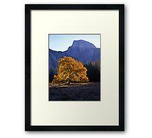 English Elm & Half Dome #2 Framed Print