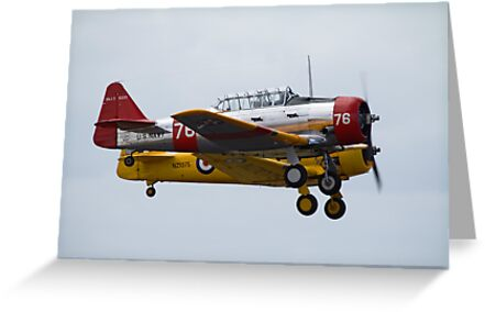 A Fine Pair of Harvards by Cecily McCarthy