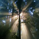rays of light by Clancey Meyer-Gilbride