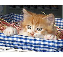 Kitty in a Basket Photographic Print