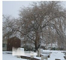Weeping Snow Willow by Ann Persse