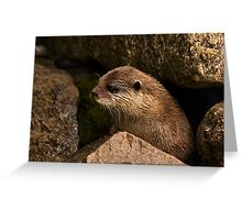 otter emerging from holt Greeting Card