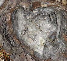 Nature's Van Gogh Heart - Hot Springs National Park, Arkansas by Lee Hiller
