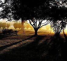 Georgia's Morning Glow by NatureGreeting Cards ©ccwri