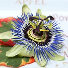 Passion flower on a plate by CanDuCreations