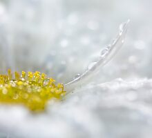 Spring sparkle by Mandy Disher