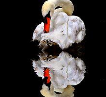 Swan Lake by Ann  Van Breemen