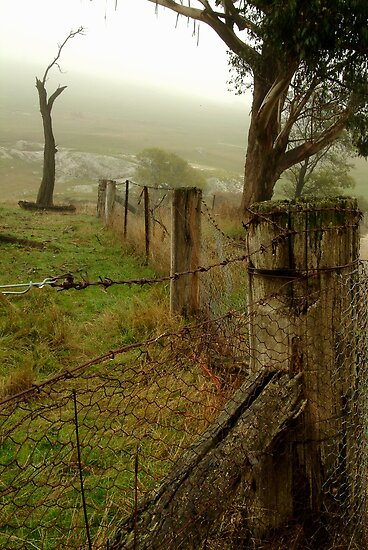 Wet Damp Cowbaw Morning, Macendon Ranges by Joe Mortelliti