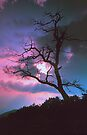 DEAD OAK,SUNSET by Chuck Wickham