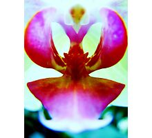 Haute Couture - A New Perspective on Orchid Life Photographic Print