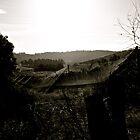 Vines. by Tom Francis