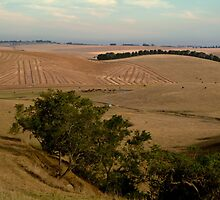 Barrabool Hills Farmlands by Joe Mortelliti