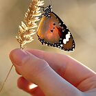Nature in her hand..... by Steve Chapple