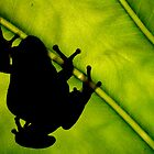 Frog Silhouette by John Marriott