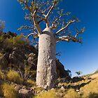 kimberley boab tree by col hellmuth