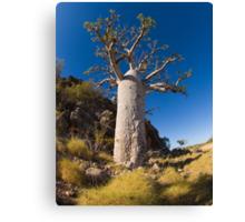 kimberley boab tree Canvas Print