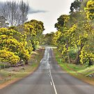 Brockman Highway, Bridgetown, WA by Elaine Teague