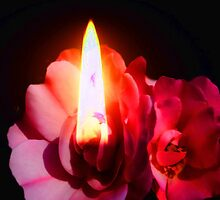 Candle rose by happyphotos