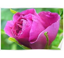 Pink Love--ly Rose Bud Poster