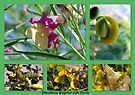 Cloudless Sulphur Life Cycle  by Kimberly Chadwick