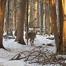 A doe in the forest by Josef Pittner