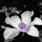 """Midnight Rain"" by Gail Jones"