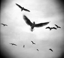 Freedom by Mary Grekos